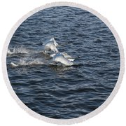 Backlit Swans Round Beach Towel