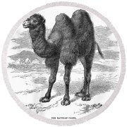 Bactrian Camel Round Beach Towel