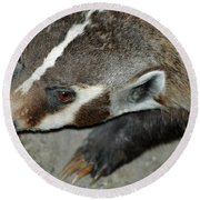 Badger On The Loose Round Beach Towel