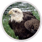 Bald Eagle At Riverside  Round Beach Towel