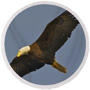 Bald Eagle Fly Over Round Beach Towel