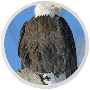 Bald Eagle Haliaeetus Leucocephalus Round Beach Towel