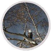 Bald Eagle In A Tree Round Beach Towel