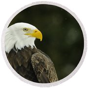 Bald Eagle In Ecomuseum Zoo Round Beach Towel