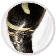 Bald-faced Hornet Stinger Round Beach Towel