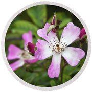Ballerina Shrub Rose 3303 Round Beach Towel