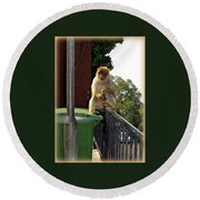 Barbary Ape Round Beach Towel
