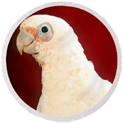 Bare Eyed Cockatoo Round Beach Towel