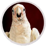 Bare Eyed Cockatoo Speaks Round Beach Towel