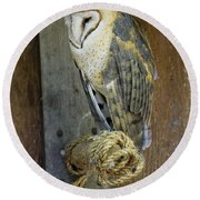 Barn Owl At Roost Round Beach Towel