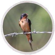 Barn Swallow - Looking Good Round Beach Towel