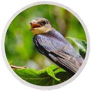 Barn Swallow In Sunlight Round Beach Towel