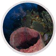 Barrel Sponge Seascape, Belize Round Beach Towel