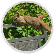 Basking Squirrel Round Beach Towel