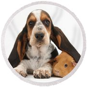 Basset Hound And Guinea Pig Round Beach Towel