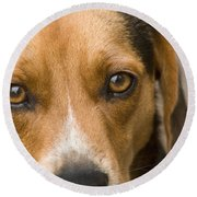 Beagle Hound Dog Eyes Of Love Round Beach Towel