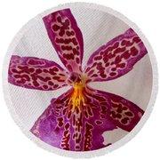Beallara Marfitch - Howard's Dream - Orchid Round Beach Towel