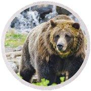 Bear On The Prowl. Round Beach Towel