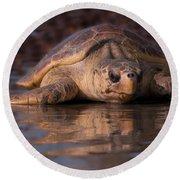 Beaufort The Turtle Round Beach Towel