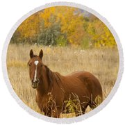 Beautiful Chestnut Horse Round Beach Towel