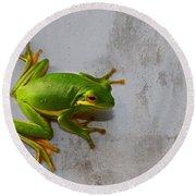 Beautiful American Green Tree Frog On Grunge Background  Round Beach Towel