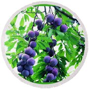 Beautiful Blue Plums On The Tree Round Beach Towel