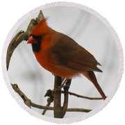 Beautiful Cardinal Round Beach Towel