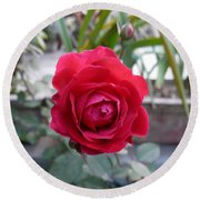 Beautiful Red Rose In A Small Garden Round Beach Towel