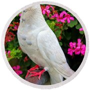Beautiful White Pigeon Round Beach Towel