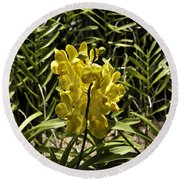 Beautiful Yellow Flowers Inside The National Orchid Garden In Singapore Round Beach Towel