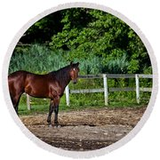 Beauty Of A Horse Round Beach Towel