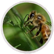 Bee In Green Round Beach Towel
