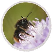 Bee In Pollen Round Beach Towel