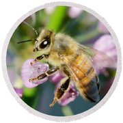 Bee On A Flower Round Beach Towel