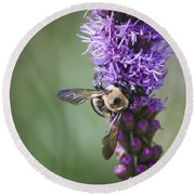 Bee On Gayfeather Squared 2 Round Beach Towel
