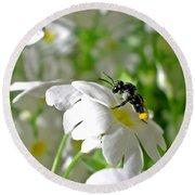 Bee On Primrose Round Beach Towel