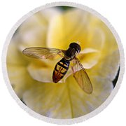 Bee On Yellow Flower Round Beach Towel