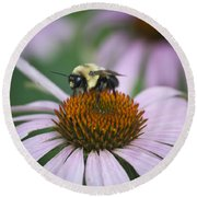 Bee Resting Squared Round Beach Towel