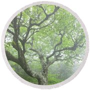Beech At Craggy Round Beach Towel