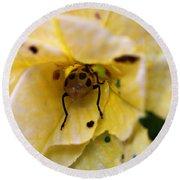 Beetle In Yellow Flower Round Beach Towel