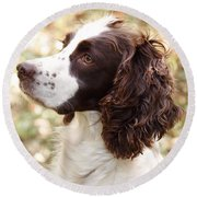 Before The Hunt - English Springer Spaniel Round Beach Towel