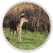 Being Aware - Deer Round Beach Towel