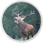 Bellowing Red Deer Stag Round Beach Towel