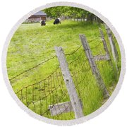 Belted Galloway Cows Farm Rockport Maine Round Beach Towel