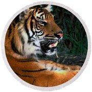 Bengal Tiger - Teeth Round Beach Towel