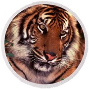 Bengal Tiger In Thought Round Beach Towel