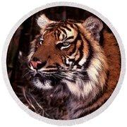 Bengal Tiger Watching Prey Round Beach Towel