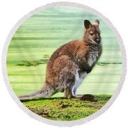 Bennets Wallaby  Round Beach Towel