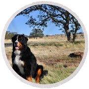 Bernese Mountain Dog In California Chaparral Round Beach Towel