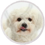 Bichon Frise With Tongue Out Round Beach Towel
